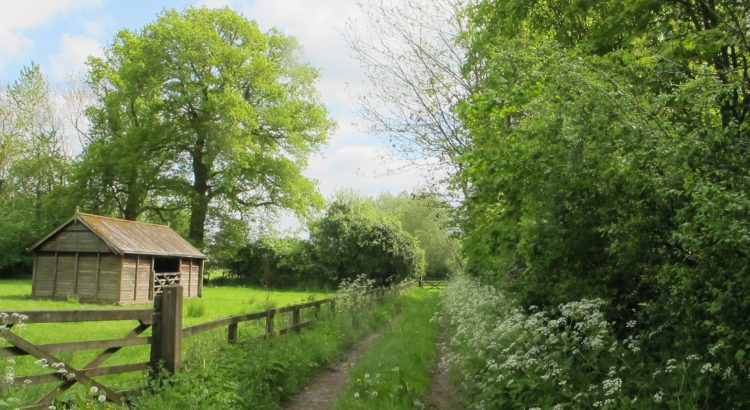 Summer track in Southrop