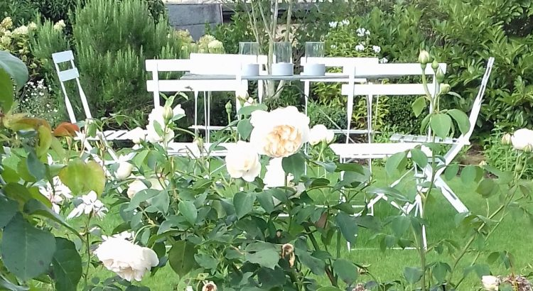 Enjoy the fragrance from the 'Lichfield Angel' Rose bed